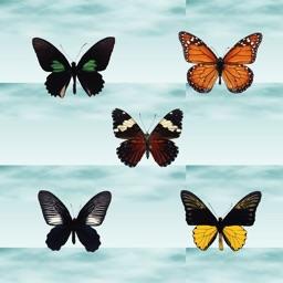 ButterFly - Create Butterfly Photo