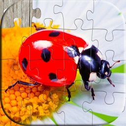 Insect puzzles - Relaxing photo picture jigsaw puzzles for kids and adults