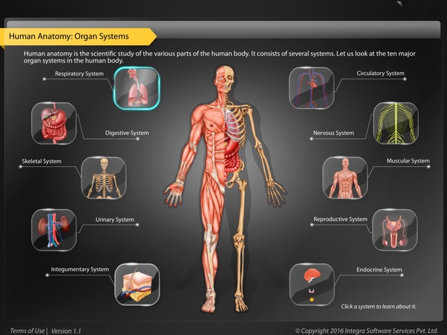 Human Anatomy Explorer On The App Store