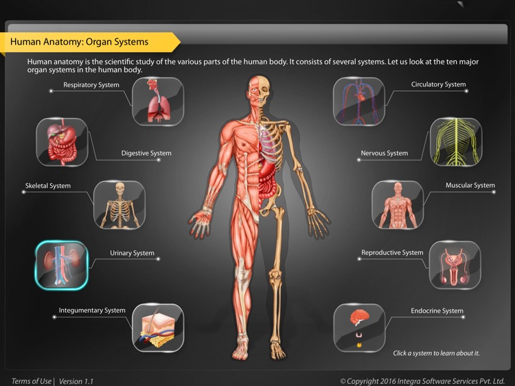 Human Anatomy Explorer Urinary System