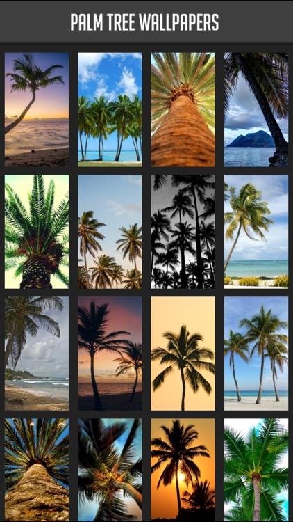 palm tree wallpaper by atlas labs