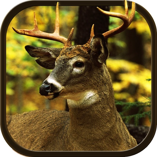New Deer Hunting Defiance 2016 - The Real Shooting game for shooting lovers