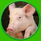 captivating farm animals for kids - no ads icon