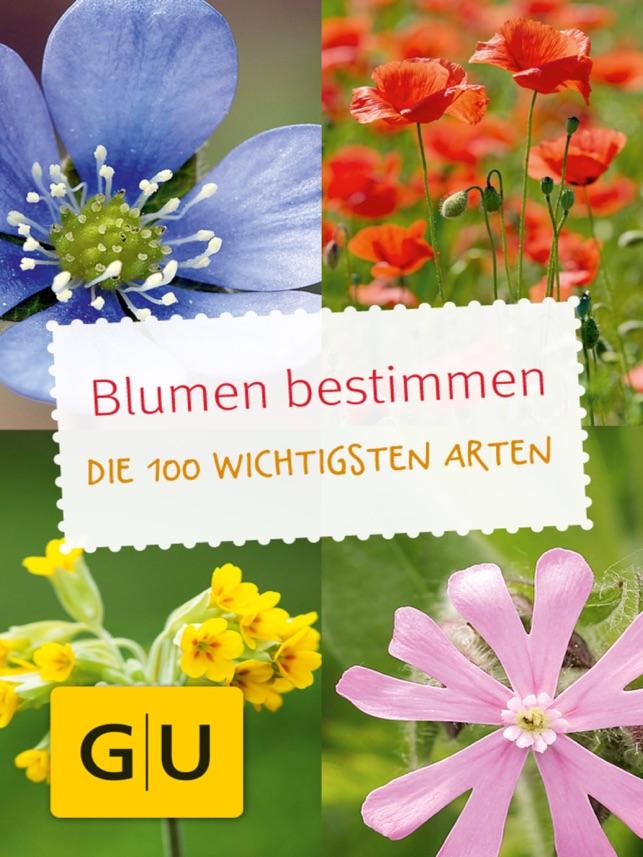 Blumen Bestimmen Entdecken Sie Welche Pflanzen Und Blüten Sie In
