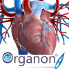 Medis Media Pty Ltd - 3D Organon Anatomy - Heart, Arteries, and Veins アートワーク