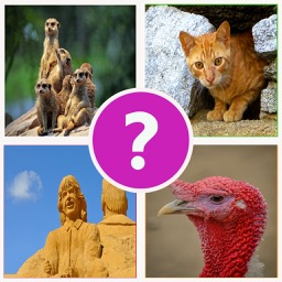 4 Pics 1 Word  Play Daily Guess what's the Picture Puzzle trivia games for free!