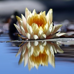 Photo Reflection HD - Water Reflect Effect Like & Mirror Flip Blender Editor