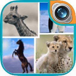 Wildlife Frame Photo Editor: Camera Holiday Picture Collage