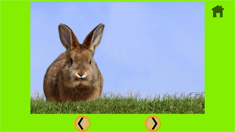 competition for rabbits - free game screenshot-4