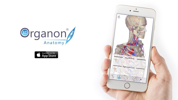 3D Organon Anatomy - Heart, Arteries, and Veins screenshot-3