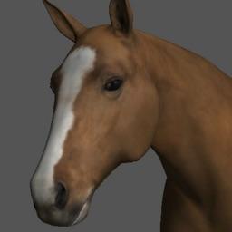 Horse Pose Tool
