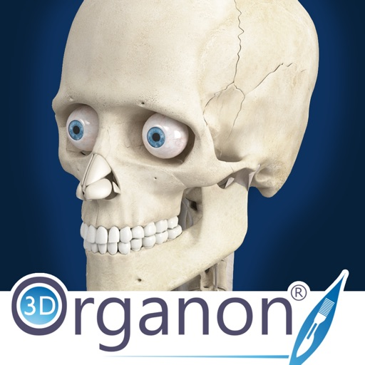 3D Organon Anatomy - Skeleton, Bones, and Ligaments iOS App
