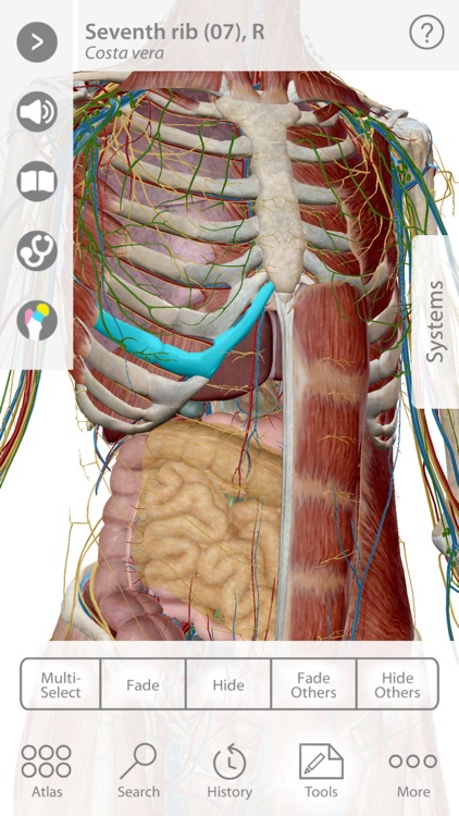 For Organizations - 2016 Human Anatomy Atlas