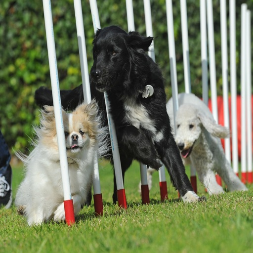 Dog Agility Training Techniques