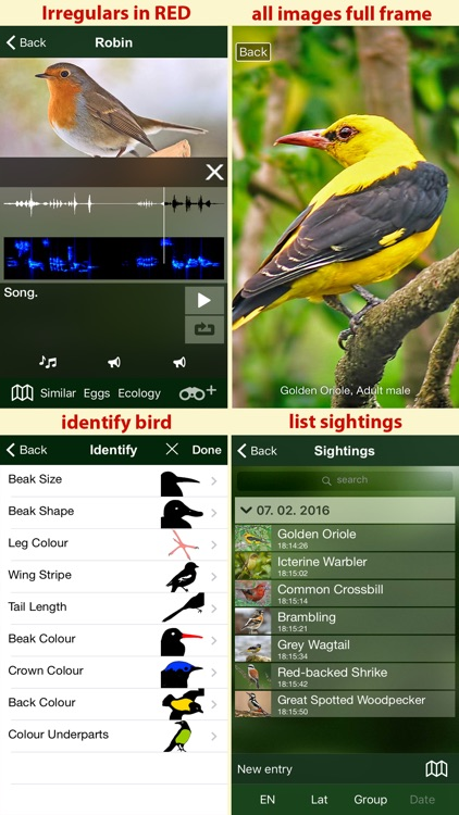 All Birds Netherlands - A Complete Field Guide to the Official List of Bird Species Recorded in the Netherlands screenshot-4