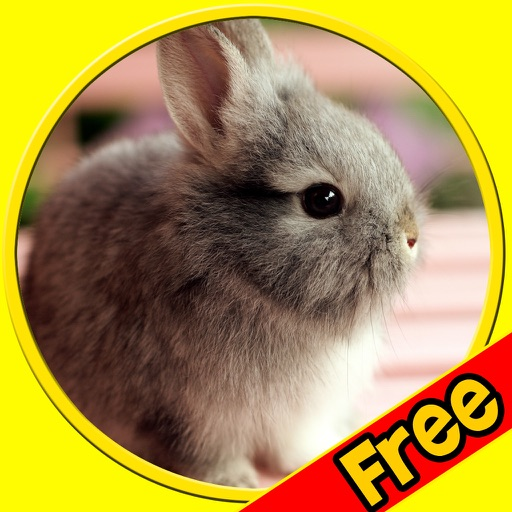 exciting rabbits for kids - free