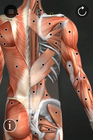 Muscle Trigger Points screenshot 1