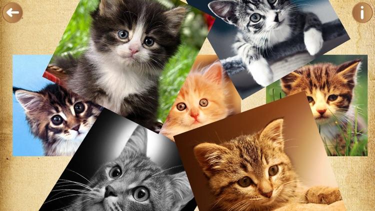 domestic cat species