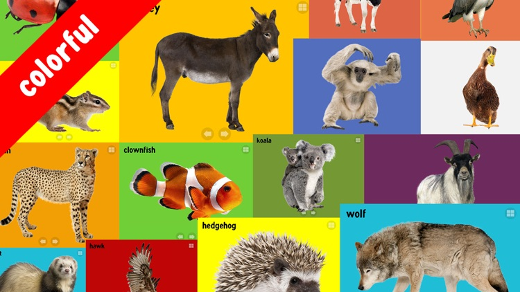 100 Animals Words for Babies & Toddlers School Edition