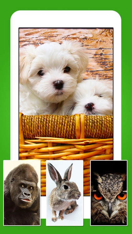 Animals - Cute Animal Wallpapers & Wild Life Backgrounds