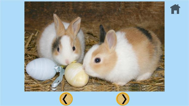 captivating rabbits for kids - free screenshot-4