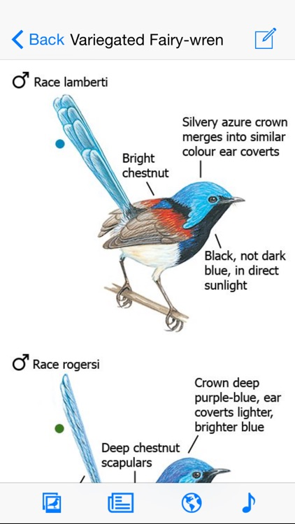 The Morcombe & Stewart Guide to Birds of Australia