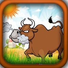 Activities of Crazy Bull Run 2016