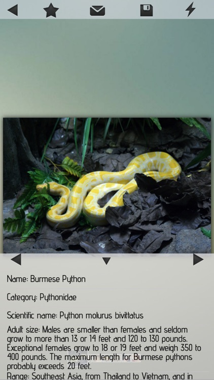 Snakes-Encyclopedia