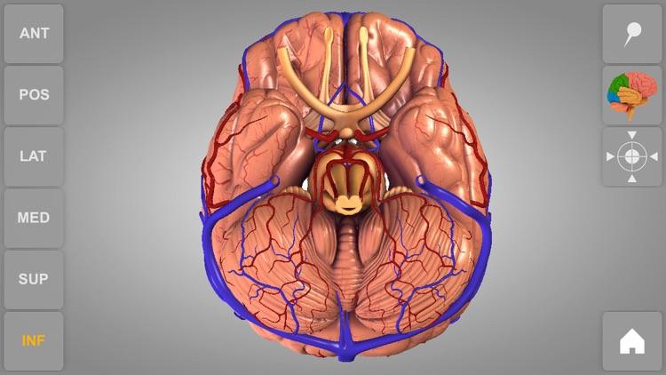 Brain - 3D Atlas of Anatomy screenshot-4