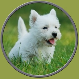 dogs pictures to win for kids - free game