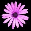 Southwest Plant Selector - iPadアプリ