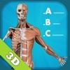 Anatomy Quiz - muscles and bones - iPadアプリ