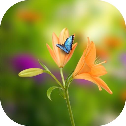 Blowing Flowers HD Wallpaper For Whatsapp By Choppa Neeraja