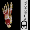 Ankle & Foot Pro III - 3D4Medical.com, LLC