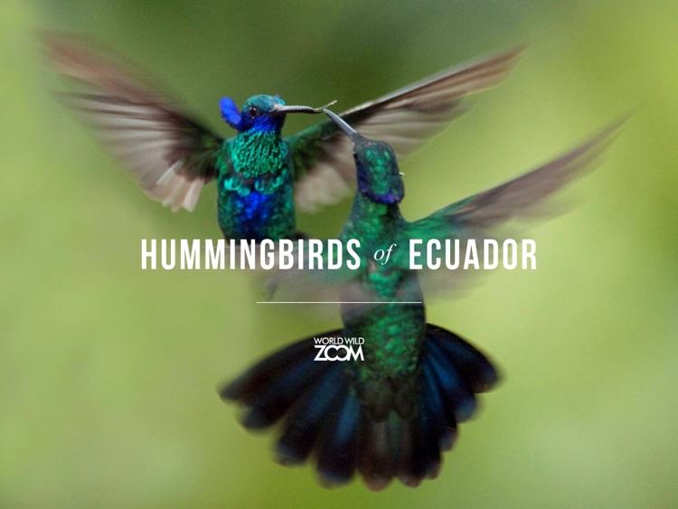 Hummingbirds of Ecuador screenshot-0