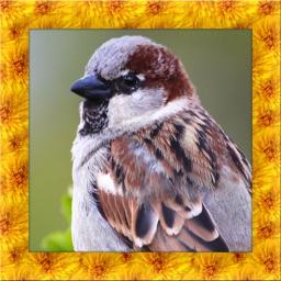 Wild Sparrow Simulator