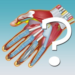 Anatomy Hand Quiz