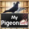 My Pigeon Loft Cloud Edition