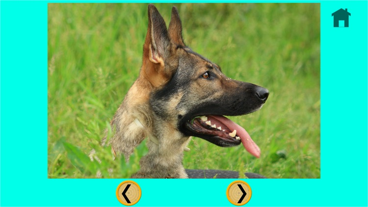 competition for dogs - free game screenshot-4