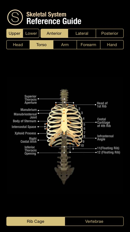 Skeletal System Reference Guide