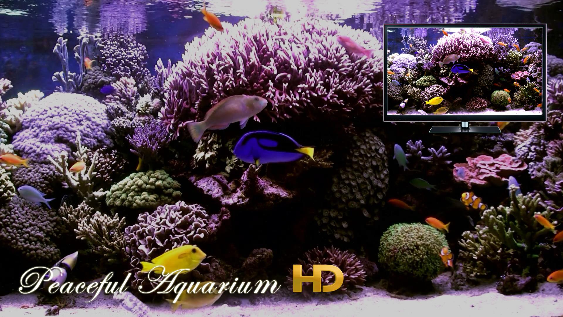 Peaceful Aquarium HD screenshot 11