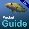 Pocket Guide UK Sea Fishing Lite
