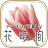 チューリップ図鑑by花時間