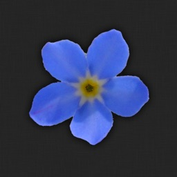 Forget-me-not!