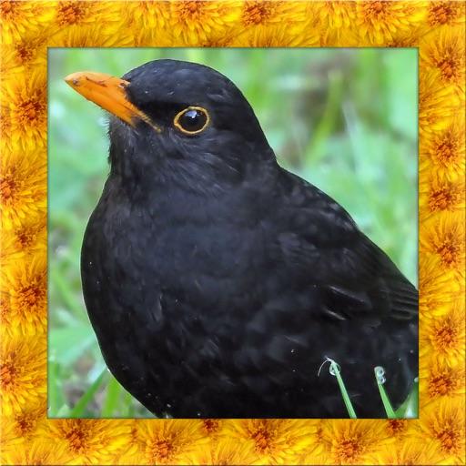 Blackbird Simulator