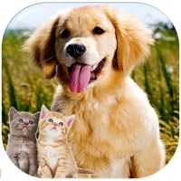 Codes for Kittens and Puppies Sliding Puzzle Hack