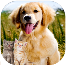 Activities of Kittens and Puppies Sliding Puzzle
