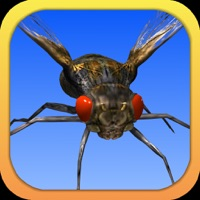 Codes for Angry Flies Hack