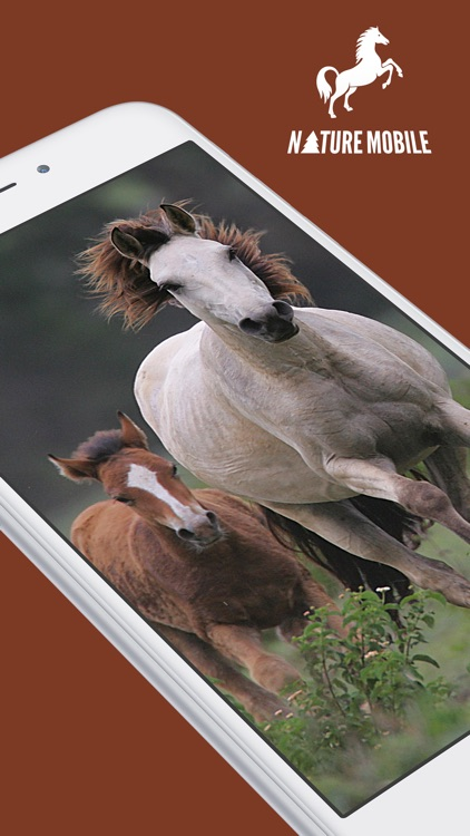 iKnow Horses 2 PRO - The Reference Work