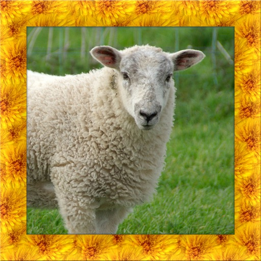 Wild Sheep Simulator 3D